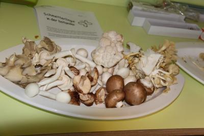 75_Ab in die Pilze (2)